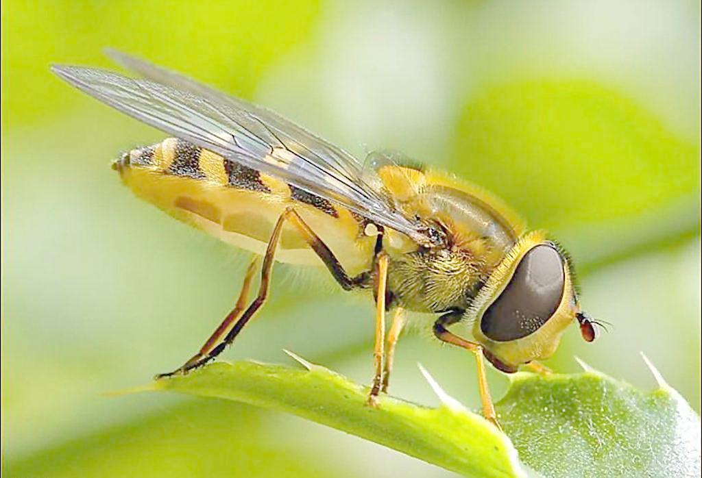 进口蜂蜜与国产蜂蜜有哪些不同呢 ?--天蜂奇蜂蜜批发